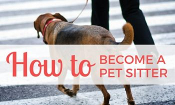 How to Become a Pet Sitter